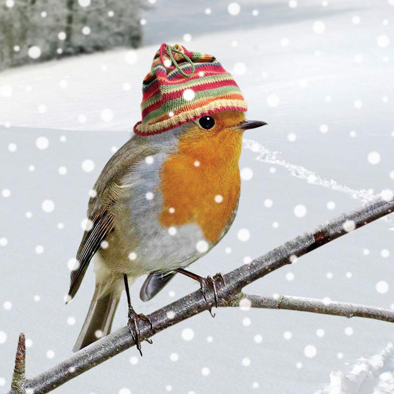 Robin-Red-Breast-800